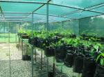 investigating controls on growth and biomass partitioning of 24 tropical dry forest species in Costa Rica