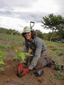 LKW - Tree planting