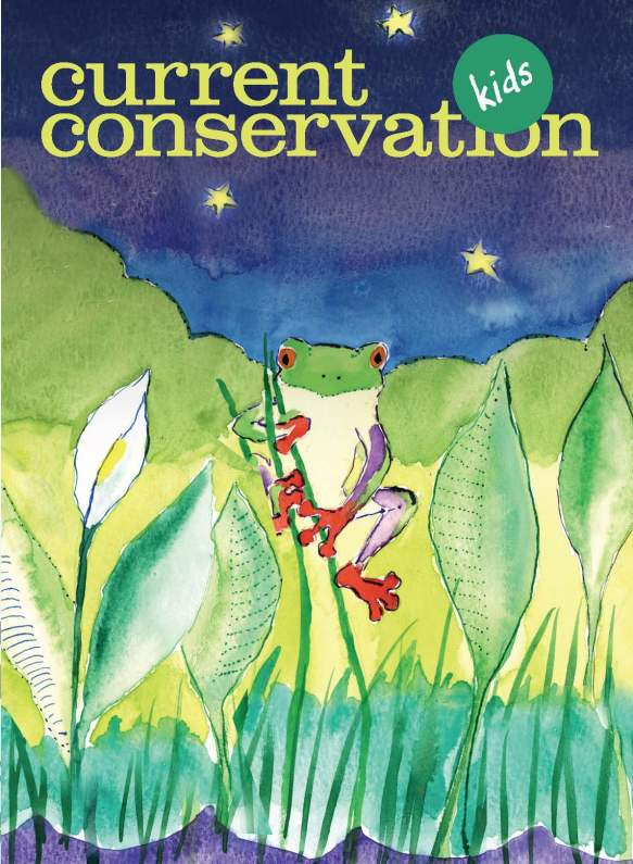 Current_Conservation_12.3-copy_Page_01